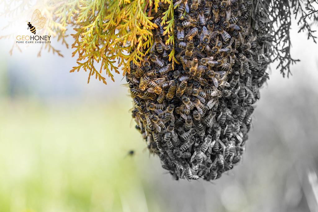 Bee Colony Loss