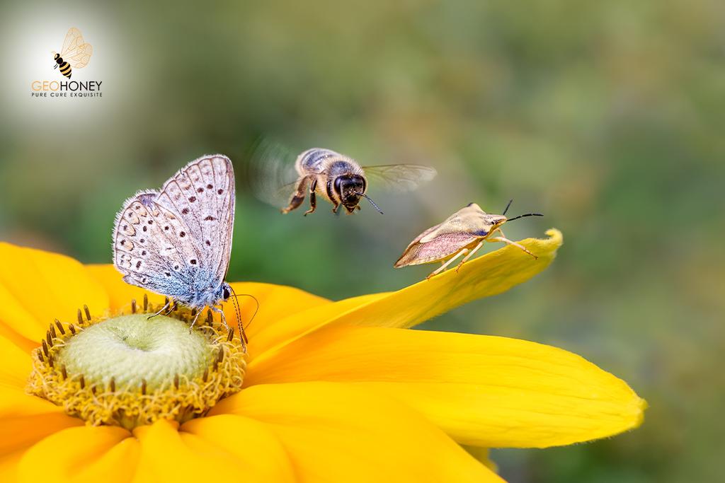 Bee Diversity