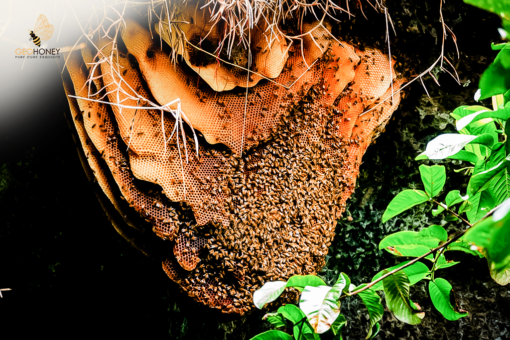 Cave honey