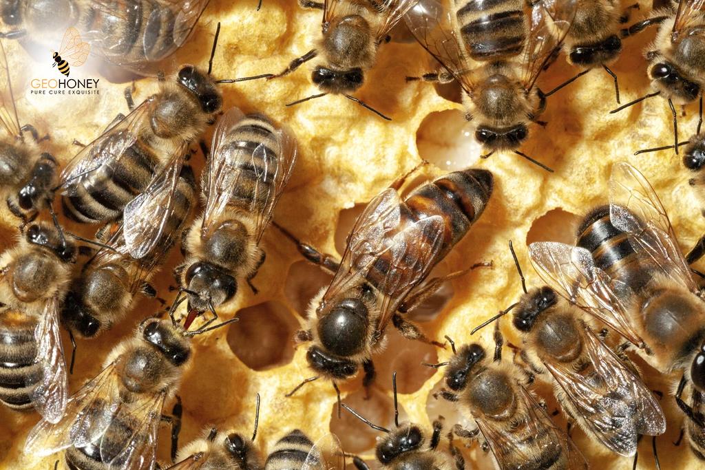 Honey Bee Queen Sings