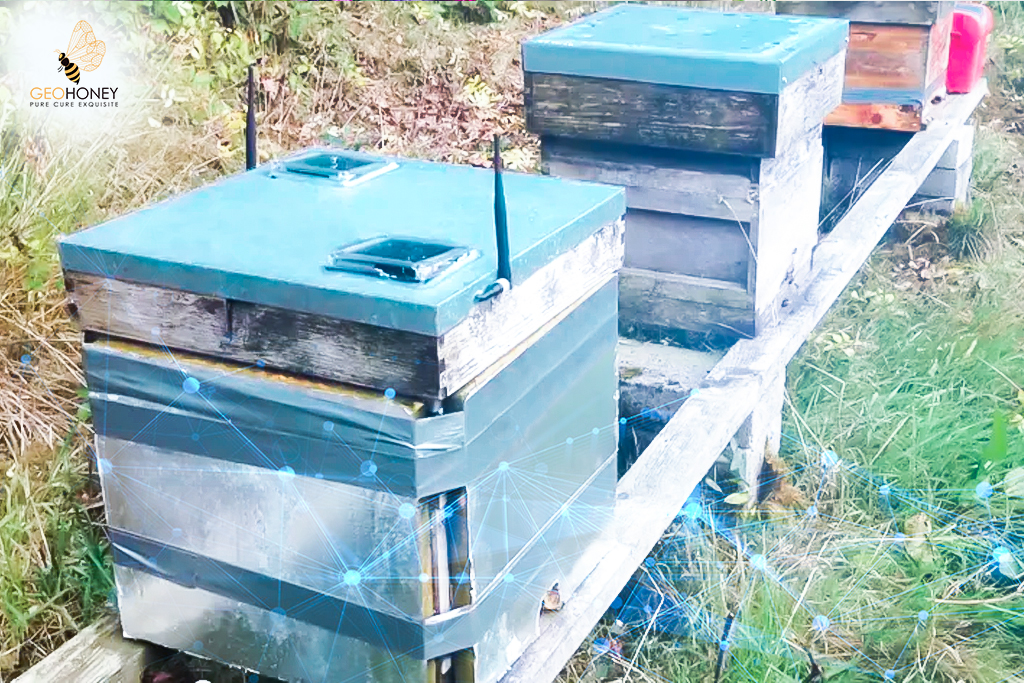 Remote Monitoring To Save Honey Bees